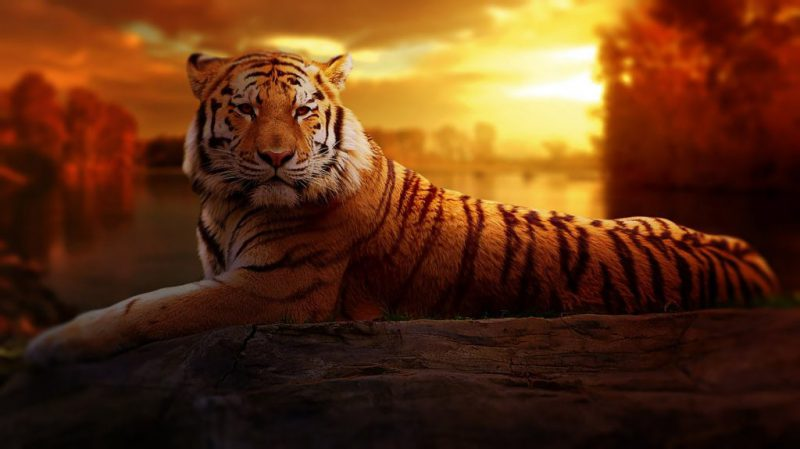animal-big-cat-jungle-206622-1024x575