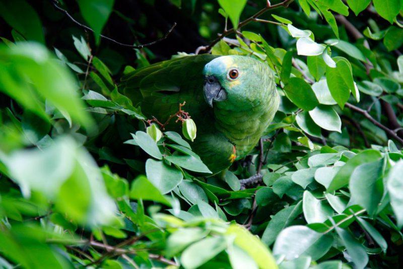 animal-bird-brazil-57021-1-1024x683
